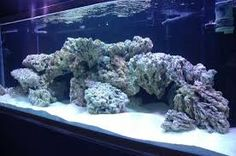 Image Result For Dry Rock Aquascapes
