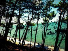 We camped here at the Bassin D'Arcachon Bordeaux, Saint Emilion, Cap Ferret, Europe Holidays, Still Life Photos, Dordogne, French Beauty, Paradis, France Travel