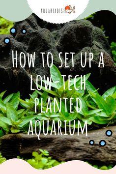 Aquarium Garden, Live Aquarium Plants, Diy Aquarium, Aquarium Design, Aquarium Decorations, Aquarium Fish Tank, Planted Aquarium, Aquarium Ideas, Fish Tanks