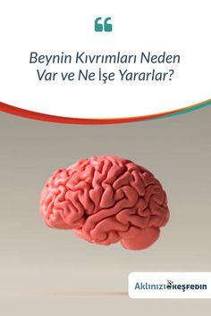 Beynimiz neden kıvrımlı? Beynin kıvrımları neden bu kadar önemli? Bu bizi nasıl etkiler ve bunun avantajları nelerdir? Bu yazıda bu soruları cevaplamaya çalışacağız. Convenience Store, Convinience Store