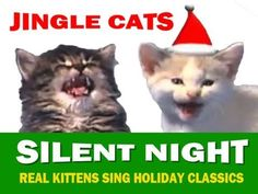 """Jingle Cats sing """"Silent Night"""" from their debut DVD entitled """"Jingle Cats Christmas"""" JINGLE. Free online Jingle Cats Silent Night ecards on Christmas I Love Cats, Cute Cats, Funny Cats, Crazy Cat Lady, Crazy Cats, Kittens Cutest, Cats And Kittens, Xmas Music, Gatos Cats"""