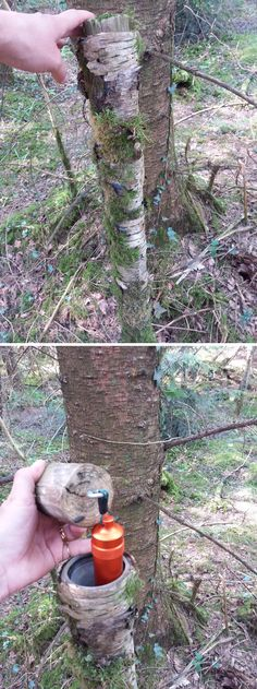 A tricky way to hide a bison tube (Kim Leonard pic) Secret Hiding Spots, Hiding Places, Survival Life Hacks, Survival Prepping, Wood Router, Wood Lathe, Cnc Router, Breakfast Nook With Storage, Geocaching Containers