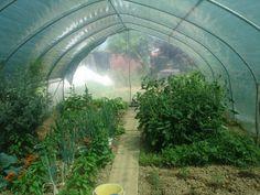 Plastenik od subote 08.06. ima zeleni pokrov, budući da nije padala kiša i bilo je sunčano, temperatura je u njemu naglo porasla pa sam povrće morala malo zaštiti.