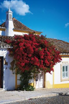 Bougainvillea in Tavira town, the Algarve, Portugal Hotels Portugal, Portugal Travel, Lisbon Portugal, Algarve, Places Around The World, Around The Worlds, Ocean Restaurant, Western Coast, Beach Shack