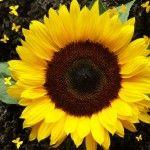 Flores da Estação | Primavera