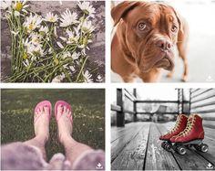 Página principal de Gratisography imágenes gratis