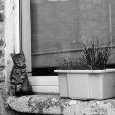 Cute kitten black and white Kittens Cutest, Black And White, Cats, Animals, Gatos, Animales, Black N White, Animaux, Black White
