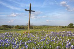 Bluebonnets and a Cross 1 photo