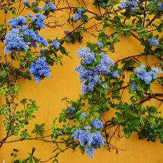 yellow, flowers, and blue image