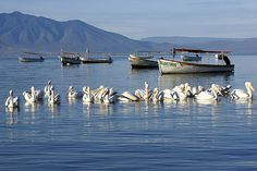 Glorious morning - this is one of my favorites taken on a magical morning in Chapala, Jalisco, Mexico