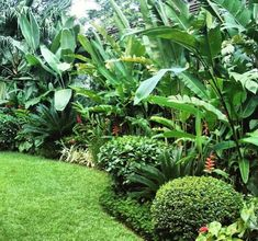 Tropical Gardens, Instagram, Landscapes, Gems, Tropical Garden, Garden Beds, Landscaping, Nighty Night, English Fashion