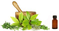 The effects of herbs on kidney disease have been proved to be very significant by so many practices. Compared with over-the-counter drugs, herbs are natural for patients. Thats why more and more people begin to seek for herbs that can help Ayurvedic Remedies, Ayurvedic Herbs, Ayurvedic Medicine, Herbal Medicine, Ayurveda, Best Fish Oil, Improve Kidney Function, Kidney Disease Symptoms, Tips