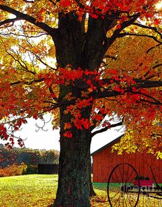 Beautiful Autumn in the country