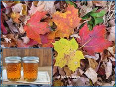 Learning how to make maple syrup is a great project for the family. This first part covers choosing the trees, placing the taps, and collecting sap. Poisonous Plants, Medicinal Plants, Tapping Maple Trees, Homemade Maple Syrup, Edible Wild Plants, Wild Edibles, Organic Gardening, Harvest, Liquid Gold
