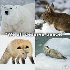 """RT if you agree 💙"" Polar Bear, Fox, Animals, Twitter, Animais, Animales, Animaux, Animal, Foxes"