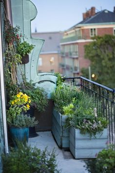 Plant herbs – a balcony full of scent! – Garten – Plant herbs – a balcony full of scent! Small Gardens, Outdoor Gardens, Roof Gardens, Balcony Plants, Balcony Gardening, Container Gardening, Indoor Balcony, Balcony Flowers, Container Plants