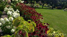 Mój ogrodowy pamiętnik - strona 805 - Forum ogrodnicze - Ogrodowisko Plants, Plant, Planets