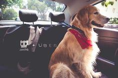 Uber'den Hayvan severlere Müjde: UberPET  Uber, sahiplerinin hayvanlarıyla ziyaret edebilmeleri için UberPET hizmetini devreye soktu. UberPET hizmetinde, koruyucu koltuk kılıfı, tüy temizleyici, ıslak mendil gibi ekipmanlarla iki taraf için de konforlu yolculuk sunuyor.  #Beycon #news #UBER Vintage Embroidery, Dogs, Animals, Uber, Behance, Tecnologia, Animales, Animaux, Pet Dogs