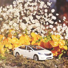 #현대자동차 #그랜저 #다이캐스트 와 함께 #봄맞이 를 해요  Let's #welcome #spring with #Hyundai #motor #Grandeur ( #Azera ) #diecast    #car #sedan #white #yellow #toy #flower #freesia #gypsohila #daily #봄 #후리지아 #안개꽃 #꽃 #입춘 #데이트 #힐링 #장난감 #자동차그램 #소소잼