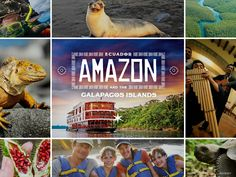 From the Amazon rainforest, the Yasuni National Park, and the Galapagos Islands, this region offers experiences in culture and animal encounters like nowhere else in the world! Who's ready for our Ecuador, Amazon and Galapagos Islands vacation?