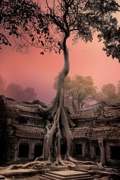 earth-witch:  Cambodia - Angkor WatPhotographer: Roman Riabtcev