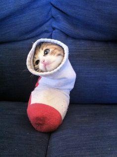 Here you go: a cat stuck in a sock