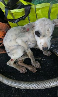 CAUSES: Please chip in if you can, and share this baby far and wide to get the help she needs! Thank you!