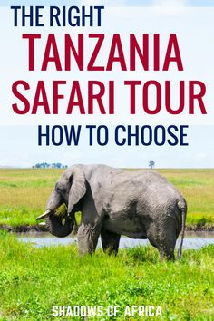 Do you need help choosing the right Tanzania safari tour? From the Serengeti to adventure and culture safaris, here is your ultimate guide to creating an amazing safari itinerary! #Tanzania #safari #Africa #travel