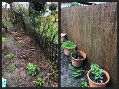 Zaun erneuern einschl. Sichtschutz und neue Bepflanzung dem entlang Plants, Ms, Green Landscape, Garden Fencing, Privacy Screens, Planting, Environment, Flora, Plant