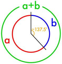 Image result for golden angle in plants protractor