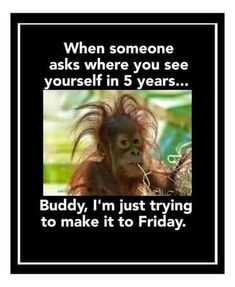 Funny Animal Memes, Animal Quotes, Cute Funny Animals, Funny Relatable Memes, Funny Jokes, New Year Quotes Funny Hilarious, Animal Humor, Funny Minion, Work Humor