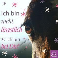Pferdesprüche & Pferdefutter Zusatz-emma-pferdefuttershop.de (2)