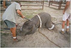 Día Mundial del Medio Ambiente: en el 2016 luchamos contra el comercio ilegal de animales