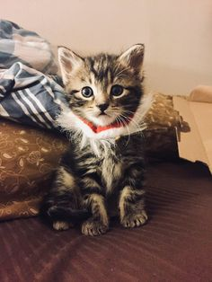 Man Gave Kitten a Home and The Kitty Replaced His Personal Space With Cuddles