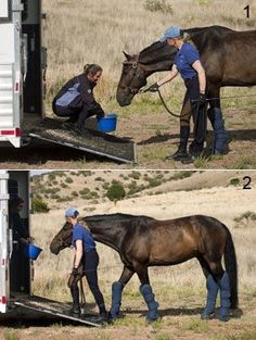 Tips for Trouble-Free Horse Trailering
