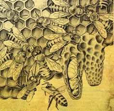 Old illustration of bees