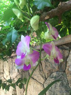 Orquídea ❤️