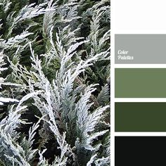 black, color match, color match for design, color solution for home, dark green, greenery color, grey, hoarfrost color, light green, olive, shades of green, White Color Palettes.