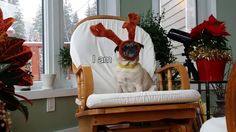 Every year Santa selects some special reindeer to help pull his Christmas sleigh. There are many applicants, but only the select few make it to the final round. See how this year's recruits perform... #christmas #pug #frenchbulldog #yorkie #santa