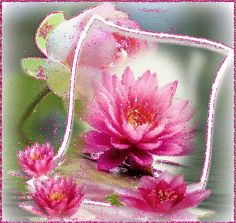 Gif_Paradise: FLOWER GIFS 2
