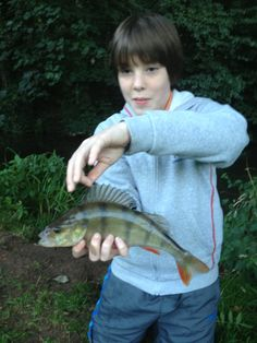 A stripey #perch caught while this  guest mastered the art of #trotting on the lower River Chew