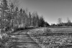 ~Shadowlands~ By Ernie Kasper #shadows   #stunning   #path   #trees   #nature   #branches   #landscape   #blackandwhitephotography