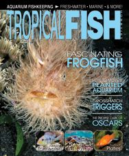 The September 2011 issue has a marine  theme with articles on coral wars, marine aquarium basics, and triggerfish, among articles on oscars and platies, and more!