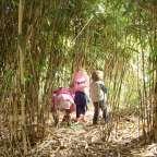 De Wamberg is een vriendelijk en afwisselend natuurgebied, met de kidsstruinen door het'bamboebos,' het 'beukenbos', dwalen langs de grote eiken, lopen over de spannende bruggetjes en verbaasd kijken naar deheksenbezems langs de rivier. Het is niet groot, ideaal voor een wandeling van een uurtje, of een kinderfeestje voor de kleintjes, je kunt heel veel verschillende blaadjes zoeken, klimmen en verschillende dieren vinden.  Het landgoedDe Wambergligt tussen het dal van de Grote ...