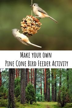 Learn about birds with our new bird feeder activity worksheet.  Students can make the bird feeder as part of a craft then hang it up outside the classroom and have the classroom make bird observations when new visitors come!  Great as a classroom activity or an at home activity.