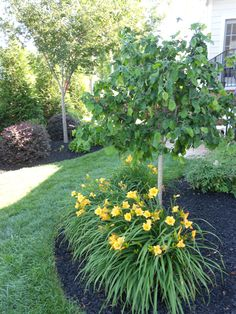 Low Maintenance Landscaping Front Yard Curb Appeal Shrubs