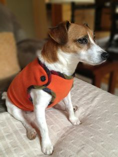 Looking for sewing project inspiration? Check out dog fleece vest by member Paola Capocasa.