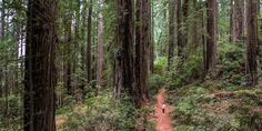 Redwood National + State Parks Overview | Jedediah Smith Redwoods State Park | Del Norte Coast Redwood State Park | Prairie Creek…