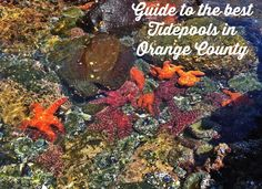 Guide to the best tide pools in orange county for families to explore and learn about sea life this summer in the oc