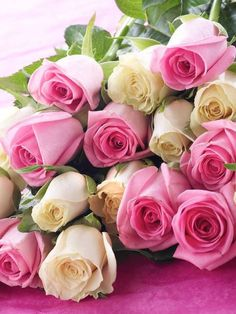 Simply Fairtrade Pink and White Roses Beautiful Rose Flowers, Beautiful Flower Arrangements, Amazing Flowers, Flower Background Wallpaper, Flower Backgrounds, White Roses, Pink Roses, Most Popular Flowers, Asian Garden